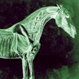 SiCK – konská dávka agresívnej muziky